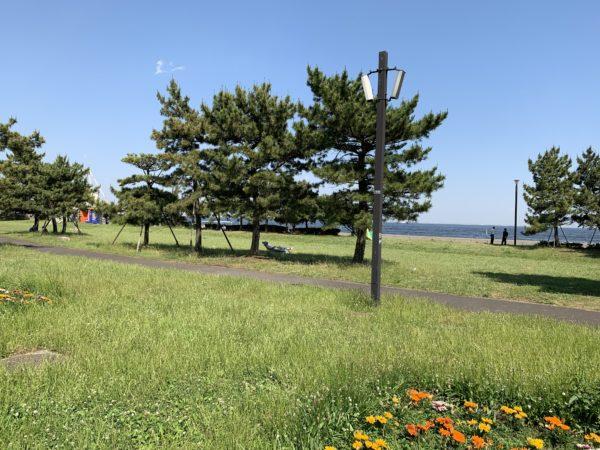 城南島海浜公園の模様3