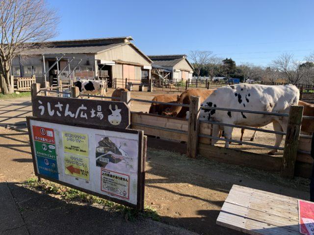 成田ゆめ牧場の模様_2